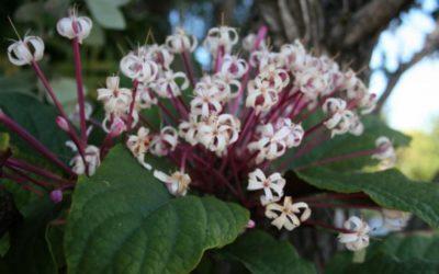 SOUL RETRIEVAL FLOWER AND GEMSTONE ESSENCE
